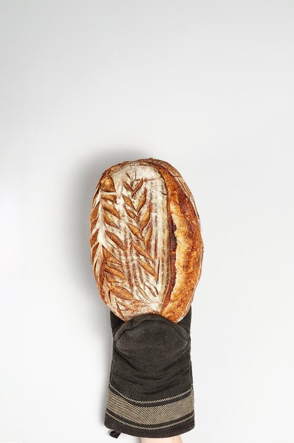 Рука в перчатке печи держа свежо испеченный хлеб зерна ремесленника весь на серой предпосылке стоковое изображение