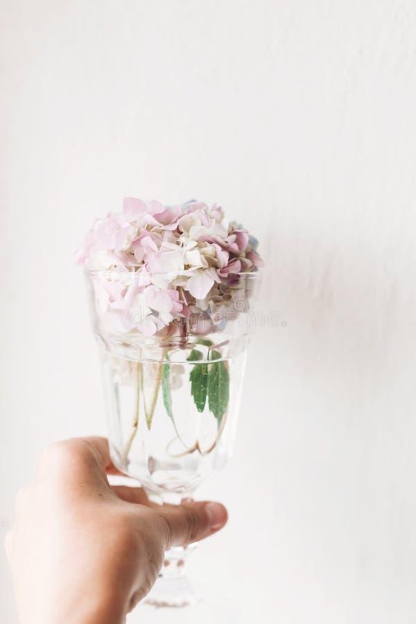 Рука держа винтажное стекло с красивыми цветками гортензии на деревенской белой древесине старого windowsill жизнь сельской местн стоковая фотография