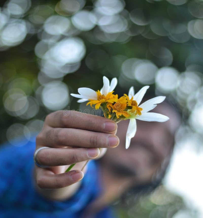 Рука держа цветки Bokeh стоковая фотография