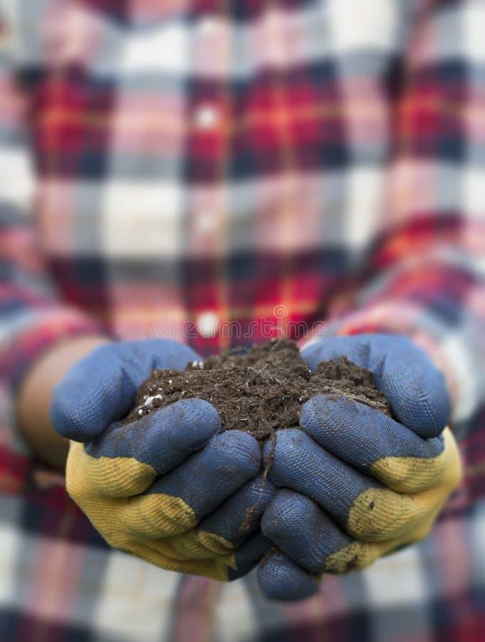 Рука держа грязь - желтую маргаритку стоковое фото rf