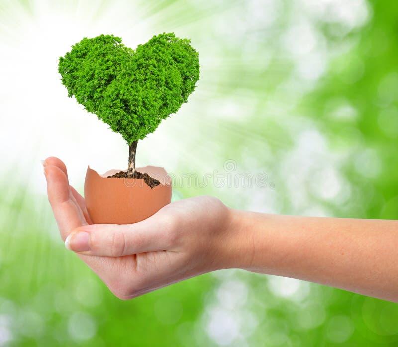 Рука держа дерево в форме сердца стоковая фотография rf
