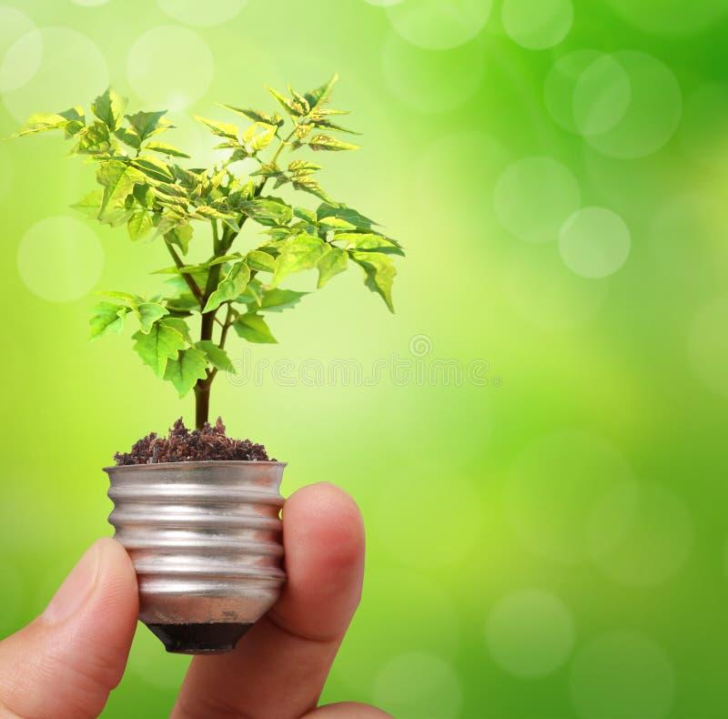Рука держа электрическую лампочку с молодым зеленым растением стоковое фото rf