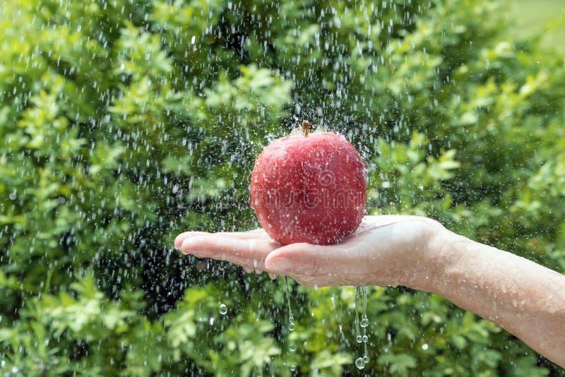 Рука держит красное яблоко в потоке воды стоковое фото rf
