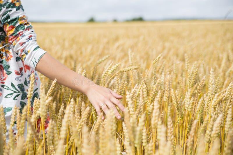 Рука женщины в пшеничном поле стоковая фотография