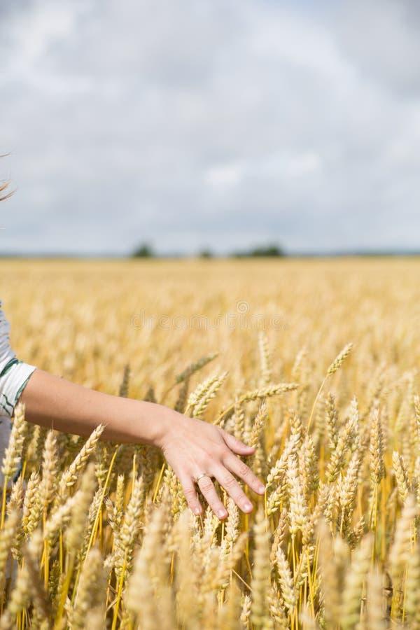 Рука женщины в пшеничном поле стоковое изображение rf