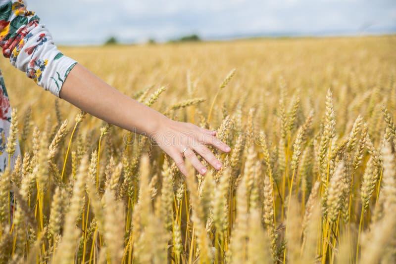 Рука женщины в пшеничном поле стоковые фото