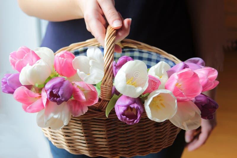 Рука женщины держа плетеную корзину с тюльпанами стоковые фото