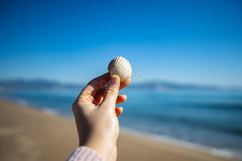 Рука женщины держа раковину моря с запачканным маяком на предпосылке стоковые фото