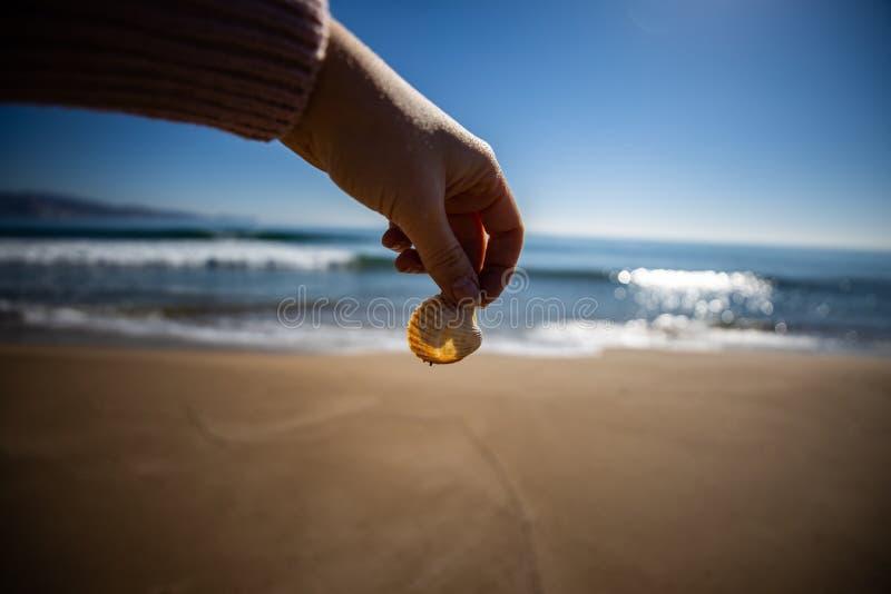 Рука женщины держа раковину моря с запачканным маяком на предпосылке стоковое изображение