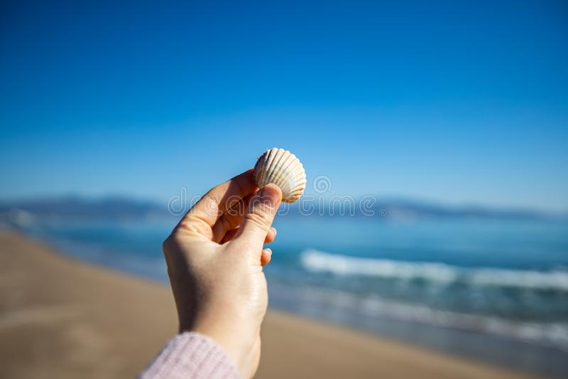 Рука женщины держа раковину моря с запачканным маяком на предпосылке стоковое фото rf