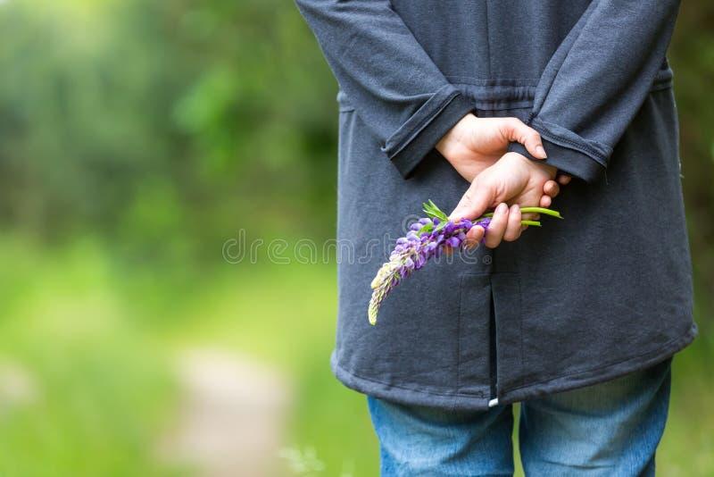 Рука женщины держа одичалый цветок lupinus стоковое изображение rf