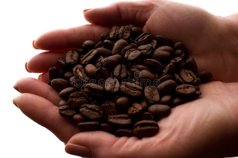 Рука женщины пригорошня кофейных зерен - силуэт стоковые фото