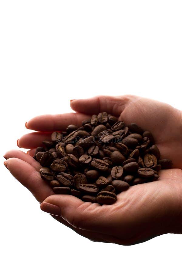Рука женщины пригорошня кофейных зерен - силуэт стоковое изображение rf