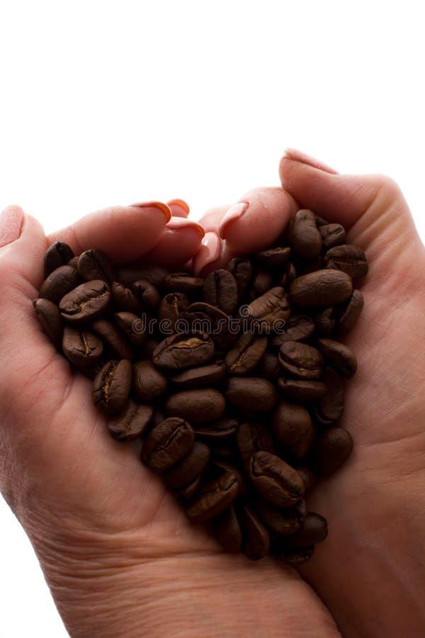 Рука женщины пригорошня кофейных зерен - силуэт стоковое фото