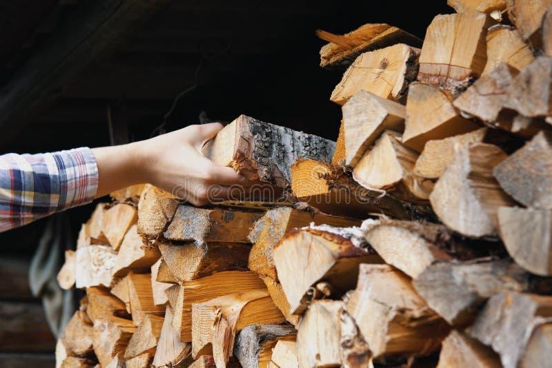 Рука женщины принимает березе сухой откалыванный журнал от woodpile стоковое изображение rf
