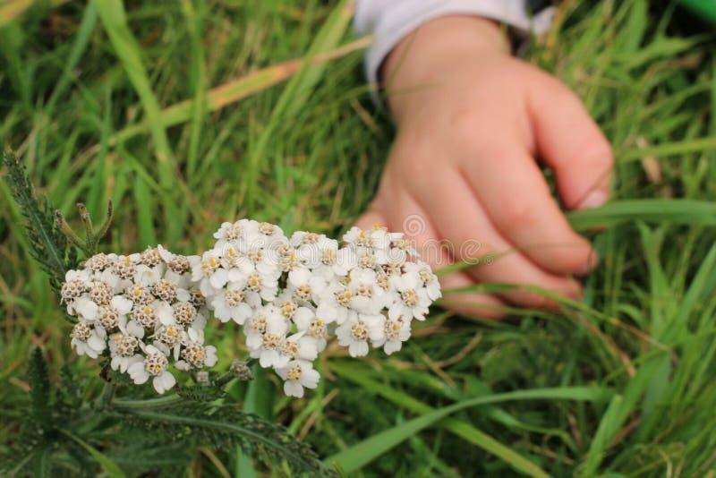 Рука и цветок стоковая фотография rf