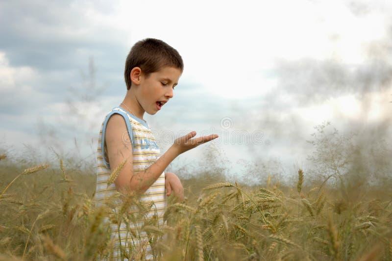 рука мальчика что-то стоковые изображения rf