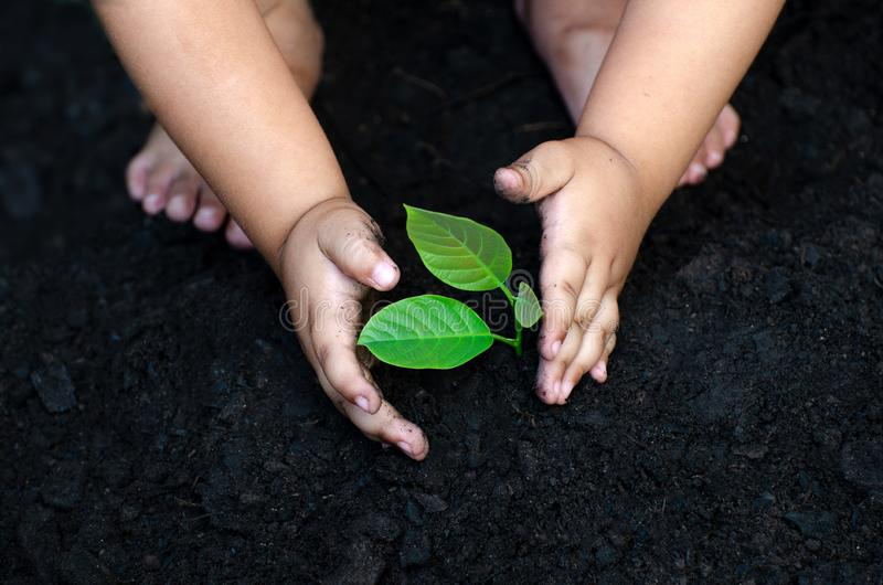 Рука младенца деревца дерева на темной земле, концепция имплантировала сознавание детей в окружающую среду стоковая фотография rf