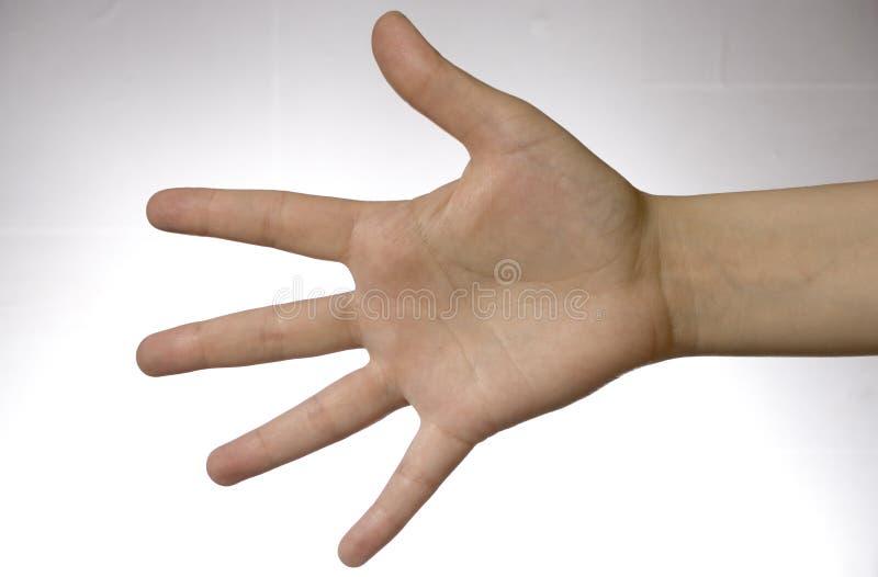 рука над белизной стоковые фото