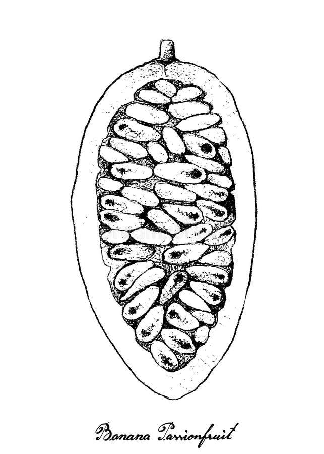 Рука нарисованная банана Passionfruit на белой предпосылке иллюстрация вектора