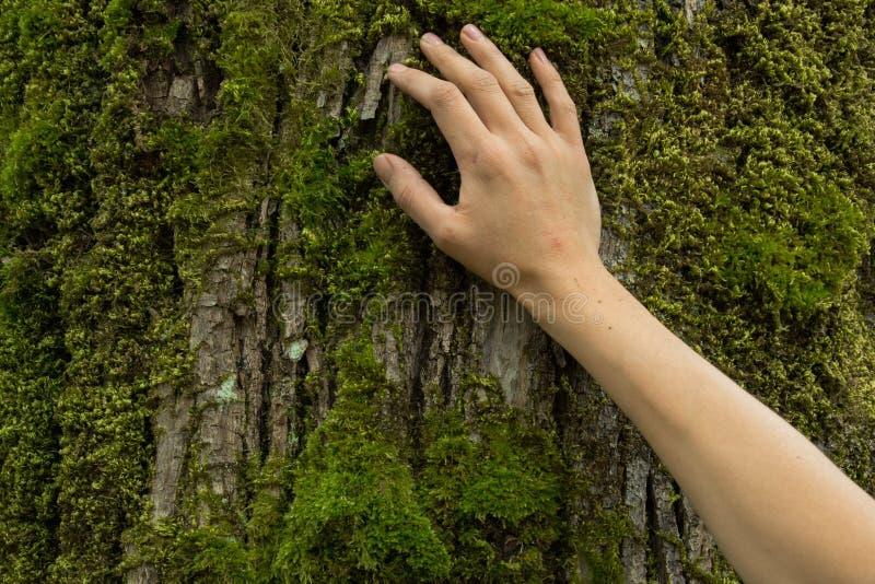 Рука на коре дерева, концепция женщины предохранения от экосистемы, космос стоковые изображения rf
