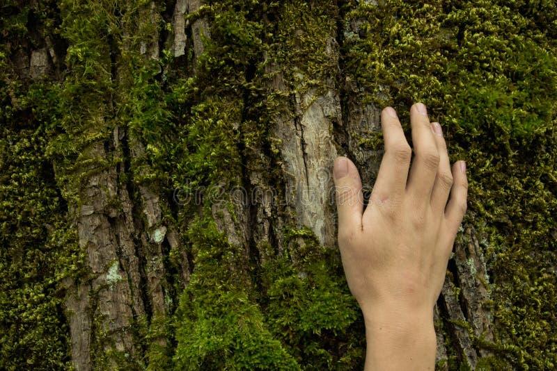 Рука на коре дерева, концепция женщины предохранения от экосистемы, космос стоковые изображения