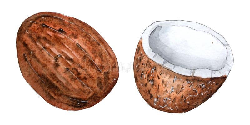 Рука покрасила плод акварели изолированный на белом backround иллюстрация вектора