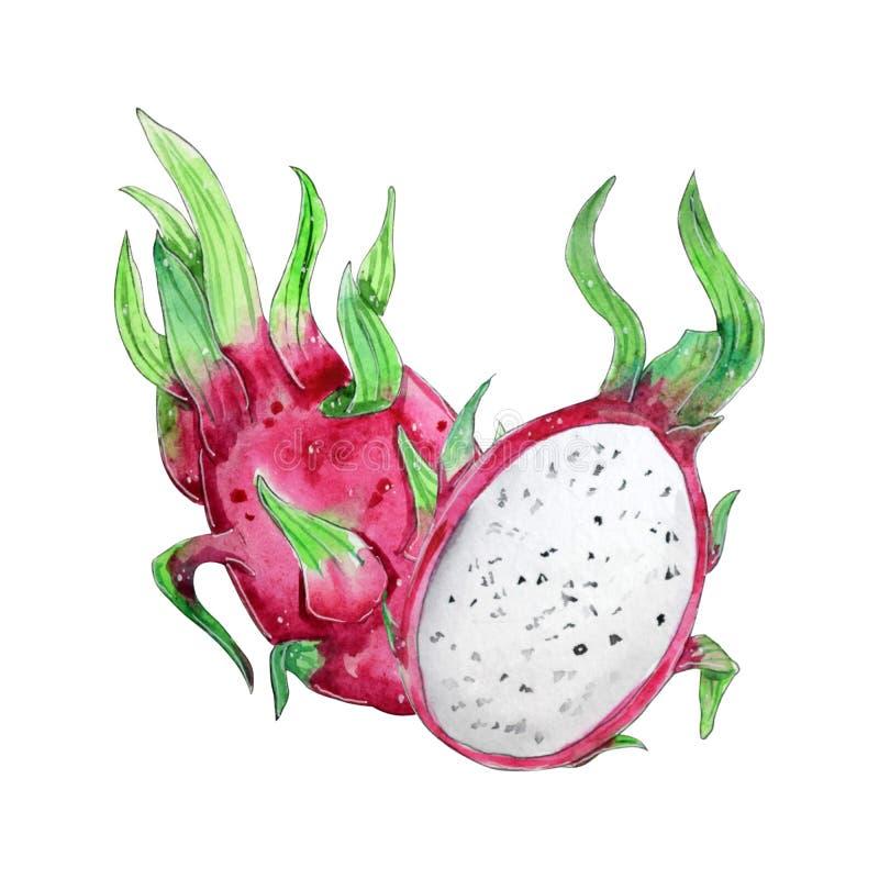 Рука покрасила плод акварели изолированный на белом backround бесплатная иллюстрация