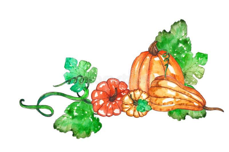 Рука покрасила состав тыквы акварели бесплатная иллюстрация