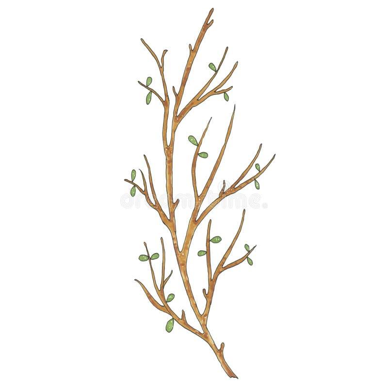Рука покрашенная с ветвью дерева отметок коричневой иллюстрация штока