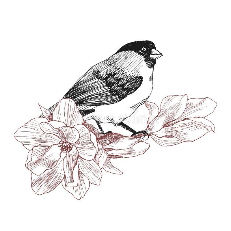Рука птицы нарисованная в винтажном стиле с магнолией цветка Птица весны сидя на ветвях цветения Линейное выгравированное искусст иллюстрация вектора