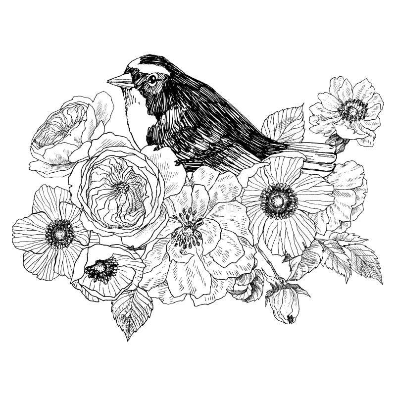 Рука птицы нарисованная в винтажном стиле с цветками Птица весны сидя на ветвях цветения Линейное выгравированное искусство биогр иллюстрация штока