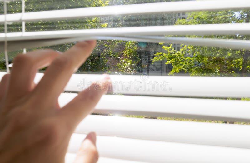 Рука раскрывает со шторками пальцев, вне окна там солнечный свет и зеленые деревья, выборочный фокус стоковая фотография