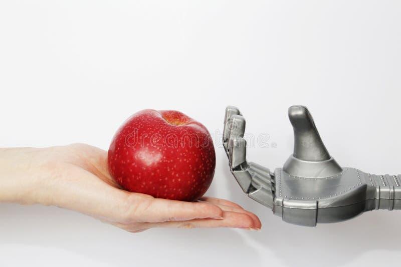 Рука реального человека дает роботу красное яблоко стоковое фото