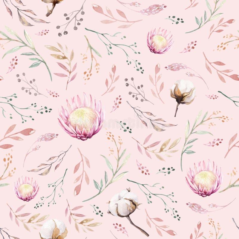 Рука рисуя безшовные цветочные узоры акварели с protea подняла, листья, ветви и цветки Богемский пинк золота бесплатная иллюстрация