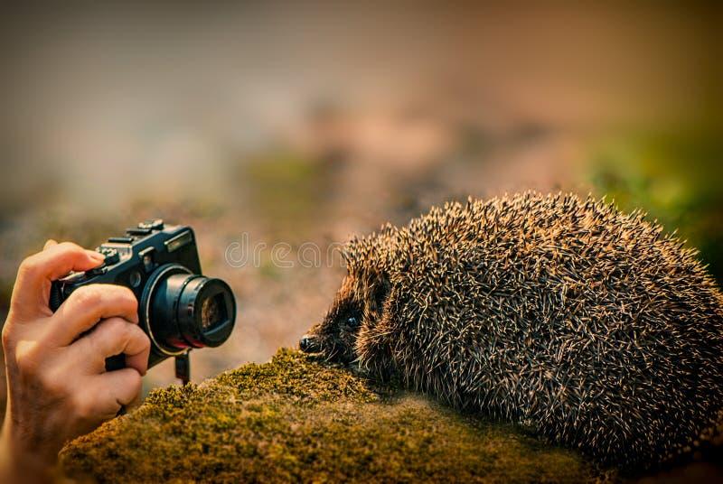 Рука с камерой и ежом стоковое изображение rf