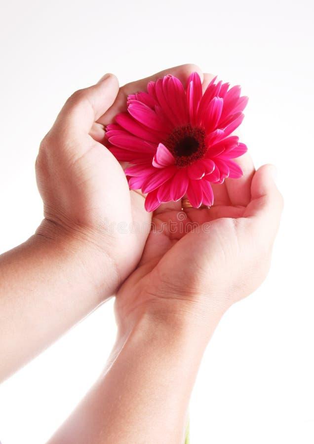 рука цветка стоковая фотография