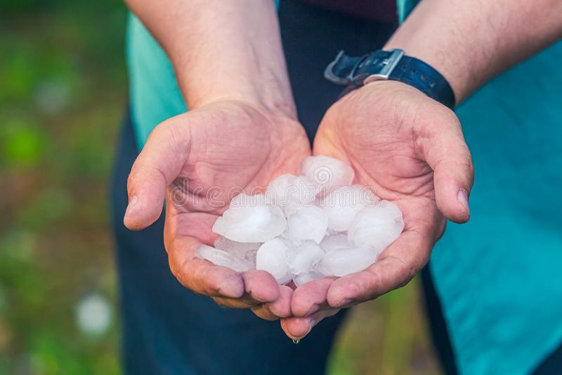 Рука человека держа оклик после hailstorm стоковые изображения rf
