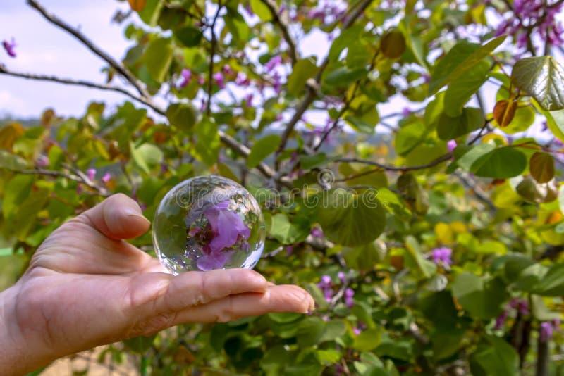 Рука человека держа хрустальный шар с отраженными цветками в нем стоковые фотографии rf