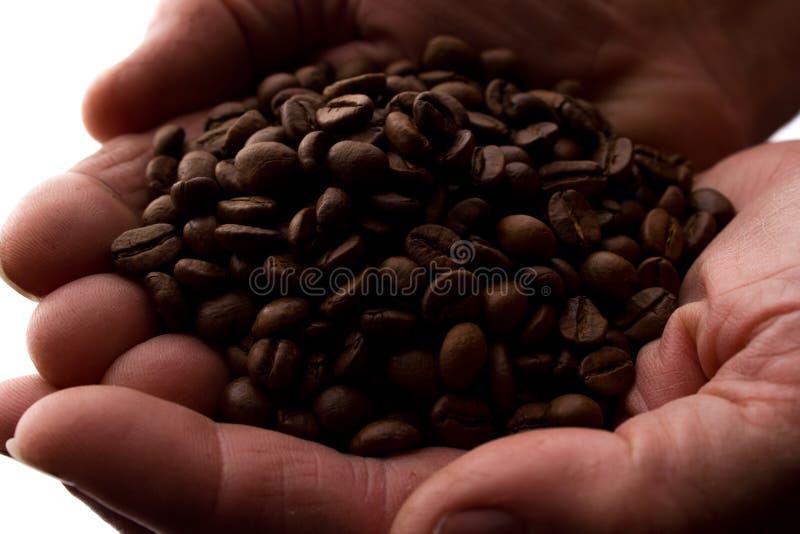 Рука человека пригорошня кофейных зерен - силуэт стоковая фотография