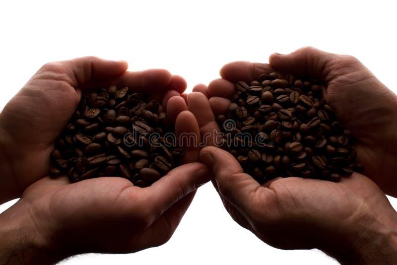 Рука 2 человек пригорошня кофейных зерен - силуэт стоковая фотография