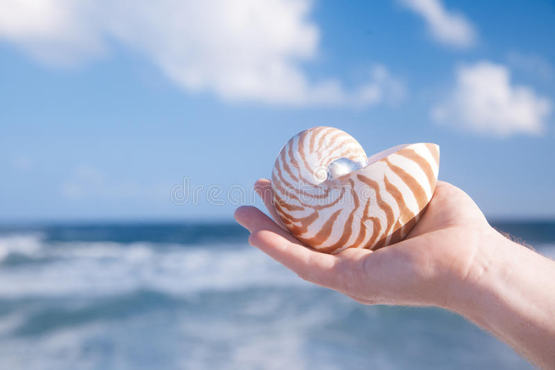 Рука человека держа раковину nautilus против моря развевает стоковое фото