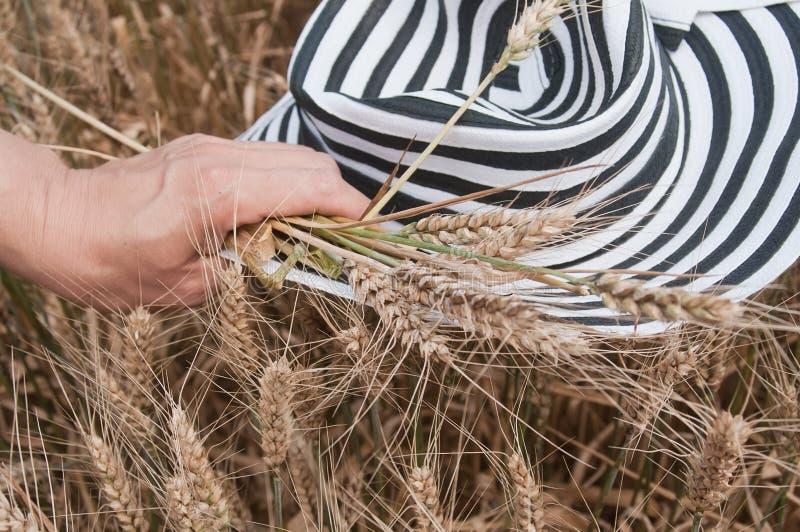 Рука f женщины с шляпой в пшеничном поле стоковые фото