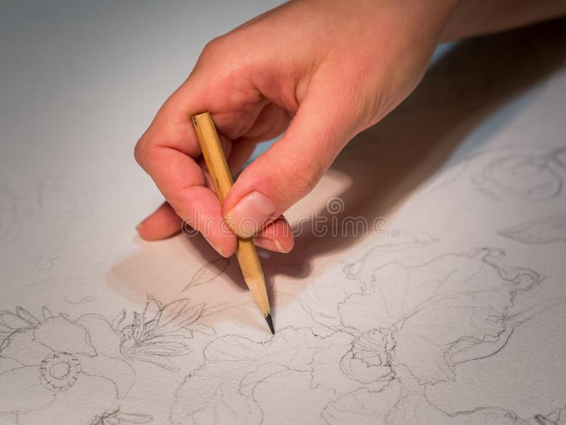 Рука ` s женщины держа карандаш и рисовать цветки на watercolo стоковые изображения rf