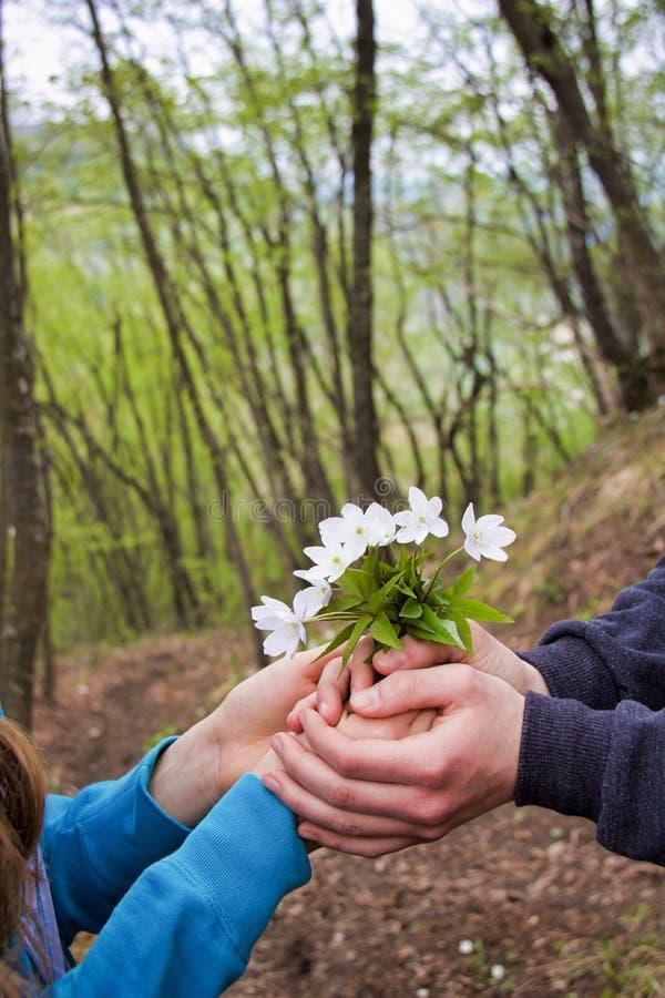 Рука s мальчика предлагая небольшой букет диких белых цветков к девушке стоковое изображение rf