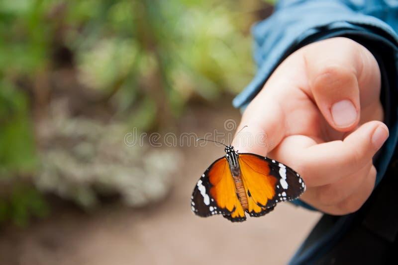 рука s ребенка бабочки стоковые изображения rf