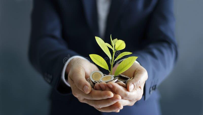 Руки бизнесмена с монетками и росток в ладони стоковые фотографии rf