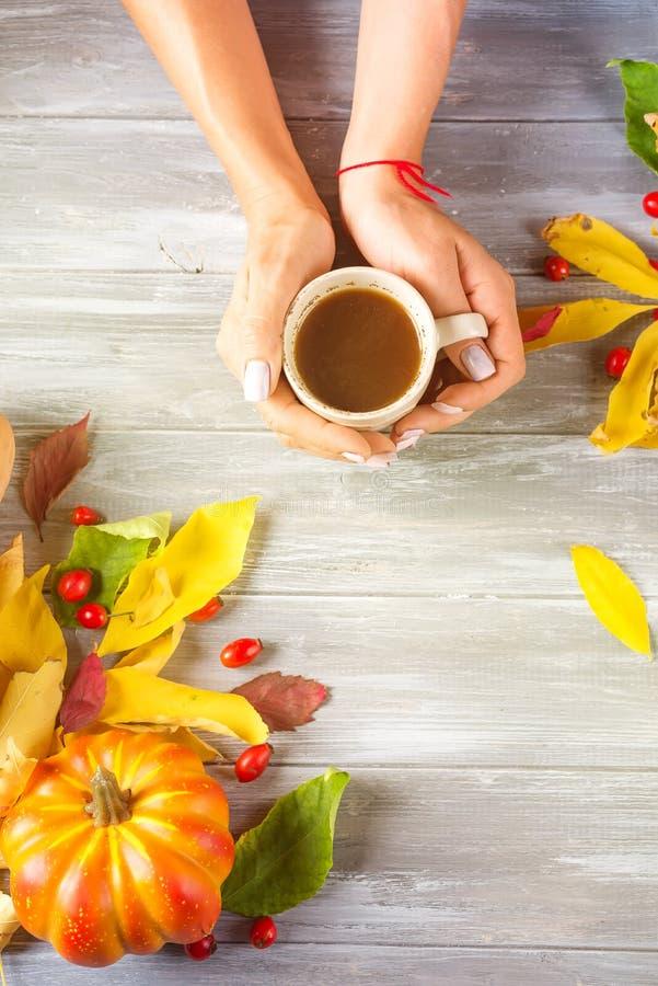 Руки девушки держа горячий кофе на серой деревянной предпосылке с космосом экземпляра Взгляд сверху стоковые изображения rf