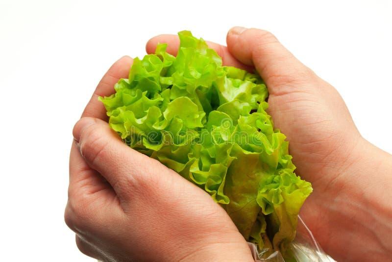Download руки держа салат стоковое изображение. изображение насчитывающей удерживание - 18379271