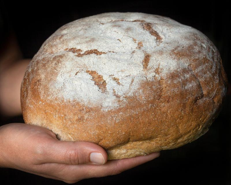 Руки держа свежий круглый хлеб стоковое изображение rf